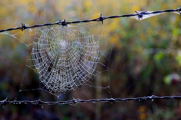 Early morning mist on a spiderweb in Cerocahui, Mexico by Ralph Velasco.