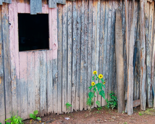 Old building with flowers in Cerocahui, Mexico by Ralph Velasco.