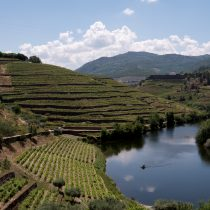 vineyard-landscape-with-tributary-douro-portugal-copyright-2018-ralph-velasco